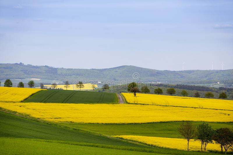 Montagnes et gisements de graine de colza au printemps en Allemagne photographie stock