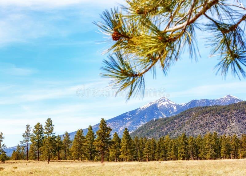 Montagnes et pins de l'Arizona de hampe de drapeaux photographie stock