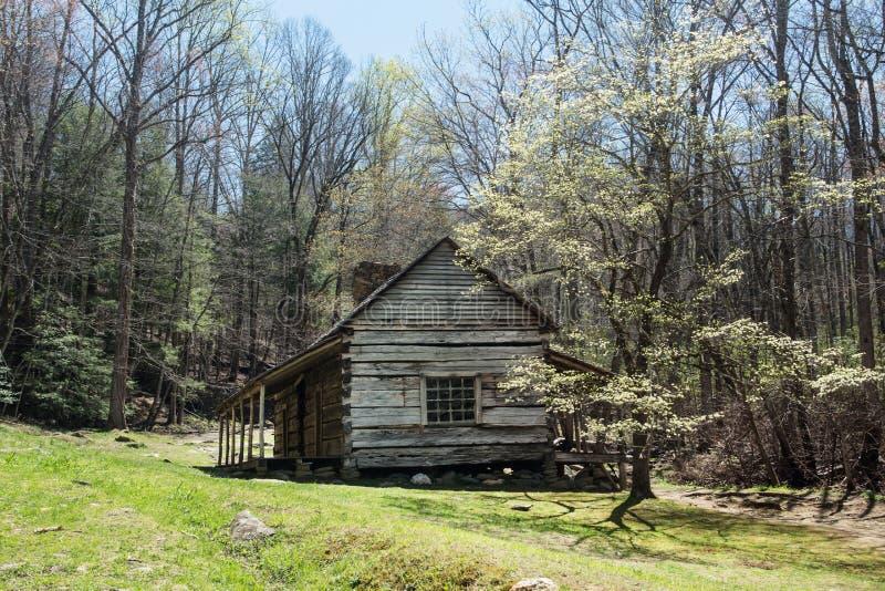 Montagnes fumeuses de floraison Tenn de cornouiller de Bud Ogle Cabin With Spring photographie stock
