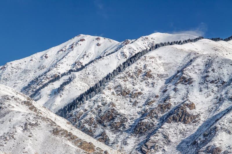 Montagnes neigeuses d'hiver avec des sapins photos stock