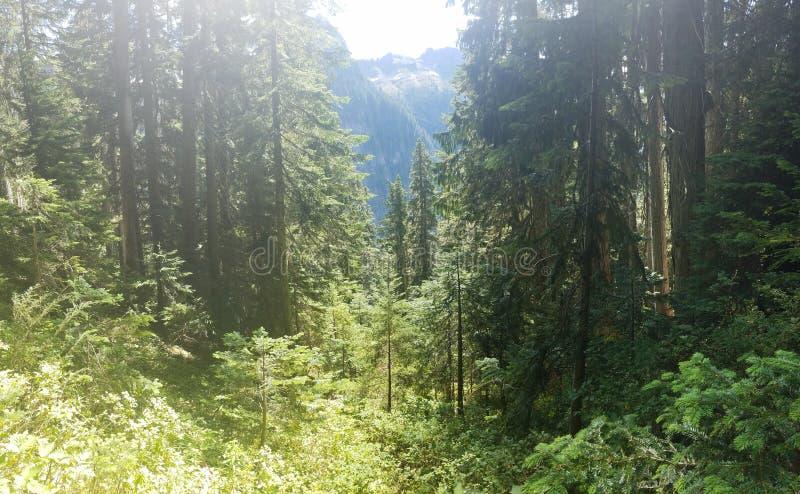 Montagnes par les arbres photos stock
