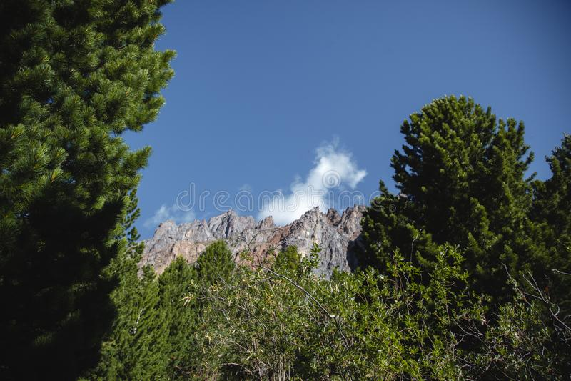 Montagnes pittoresques d'Altai en été Paysage avec un ciel bleu sur les gammes de montagne et la forêt impeccable dans l'Altai photo libre de droits