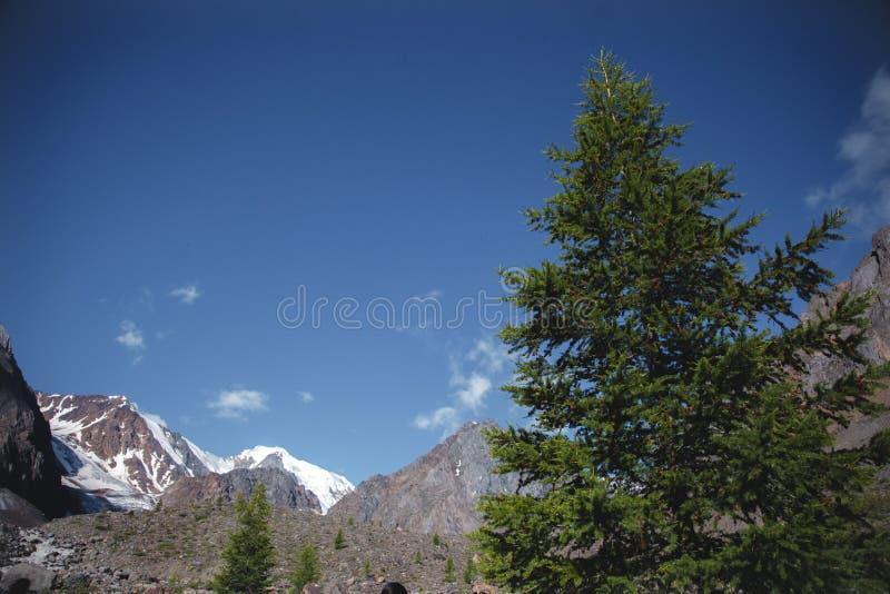 Montagnes pittoresques d'Altai en été Paysage avec un ciel bleu sur les gammes de montagne et la forêt impeccable dans l'Altai photos stock