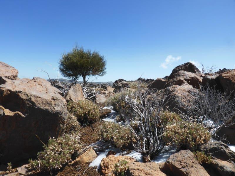 Montagnes rocheuses en hiver - paysage aride de désert photos libres de droits