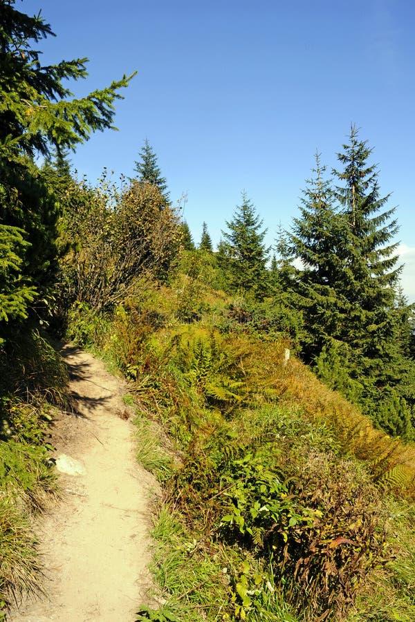 Montagnes vert clair pendant l'été photographie stock libre de droits