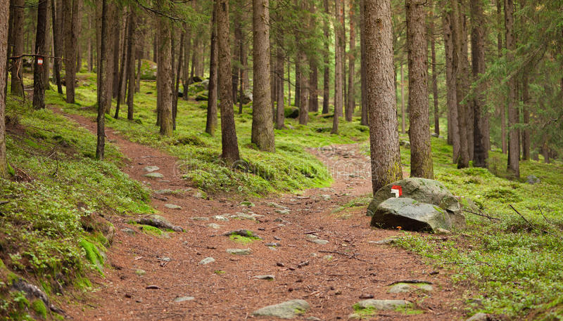 Montain path. A single path splitting in two different directions stock photo