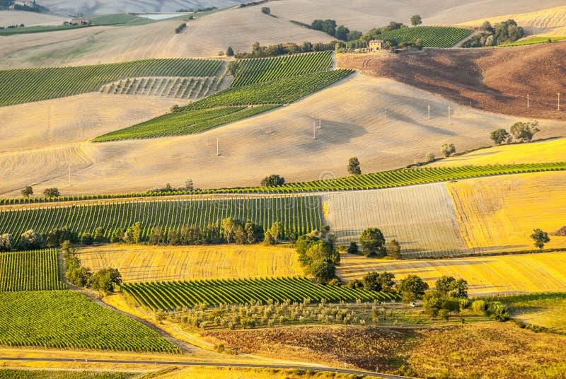 Montalcino (托斯卡纳) 图库摄影