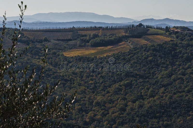 MONTALCINO - TUSCANY/ITALY: ΣΤΙΣ 31 ΟΚΤΩΒΡΊΟΥ 2016: Επαρχία Montalcino, αμπελώνας, δέντρα κυπαρισσιών και πράσινοι τομείς στοκ φωτογραφίες με δικαίωμα ελεύθερης χρήσης