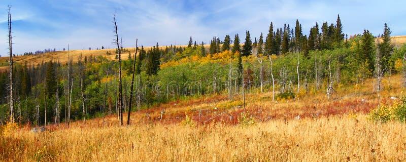 Montana Autumn Scenery fotografie stock libere da diritti