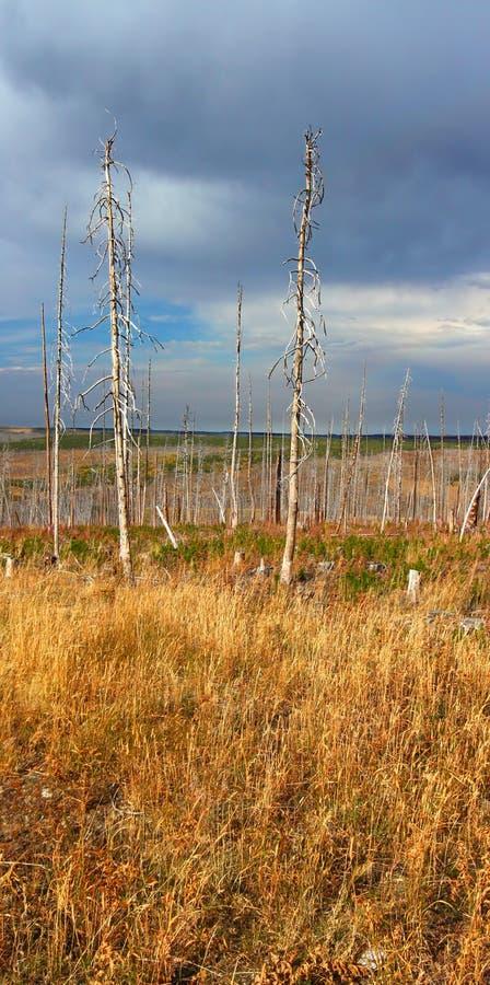 Montana Countryside en otoño imagenes de archivo