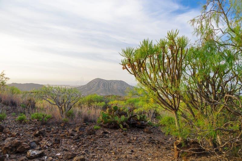 Montana de Guaza, Tenerife, Espanha imagem de stock royalty free