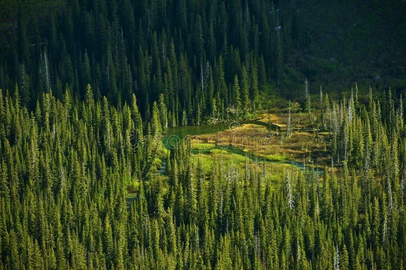 Montana Forest e lagos imagem de stock