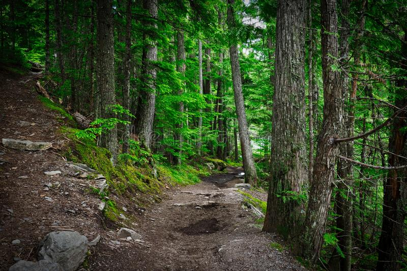 Montana Forest Trail em julho foto de stock