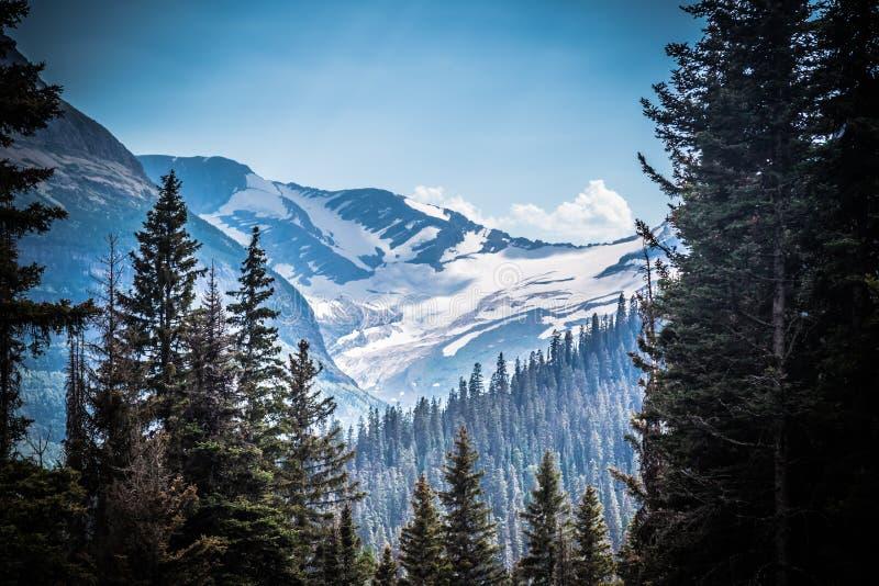 Montana Glacier National Park Jackson Glacier till och med träden royaltyfri foto