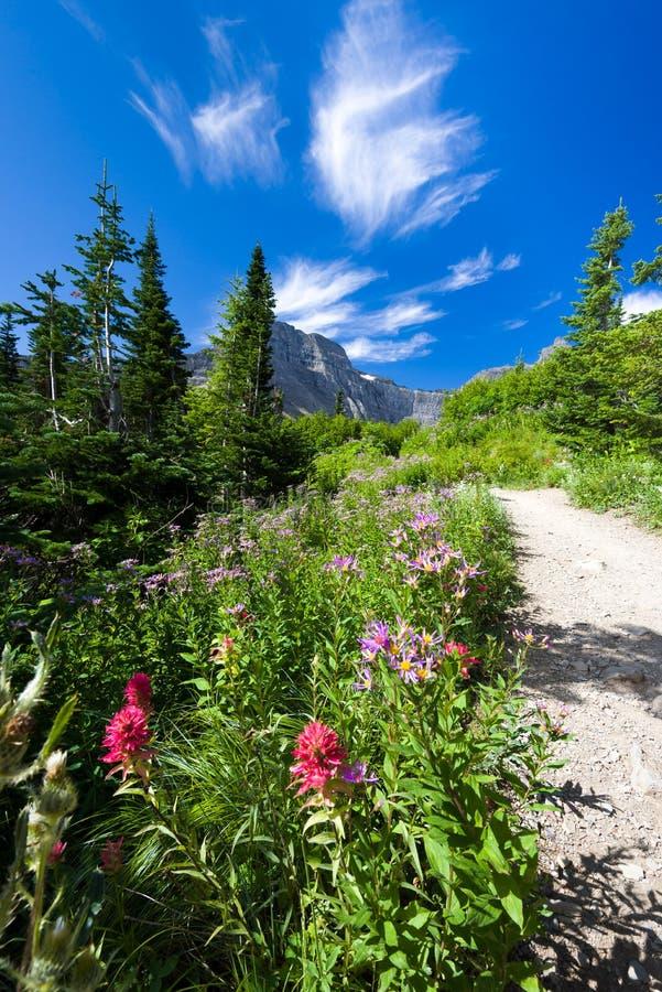 Download Montana Halny ślad Na Jaskrawym Letnim Dniu Obraz Stock - Obraz złożonej z flory, wysokogórski: 57664721