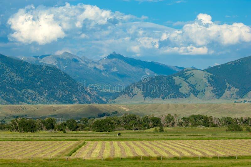 Download Montana landscape stock image. Image of rolls, organic - 24119697