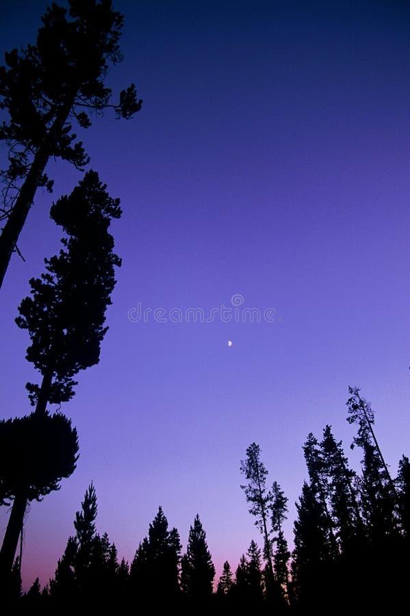montana nationalparksolnedgång royaltyfri foto