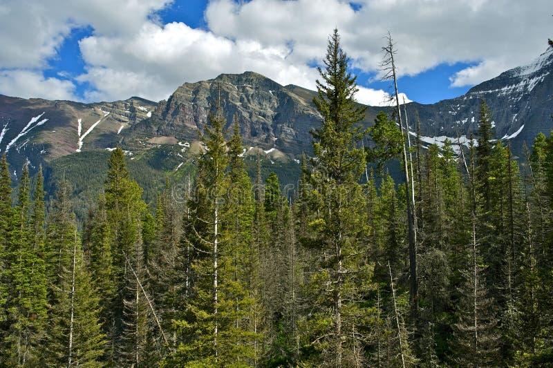 Download Montana USA stock image. Image of trees, range, montana - 28672297
