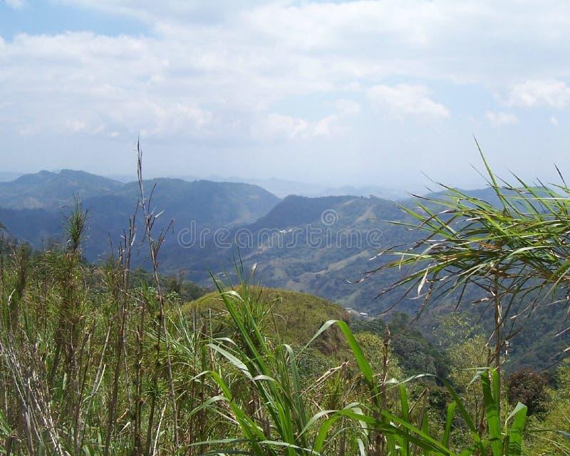 montana vista zdjęcia royalty free