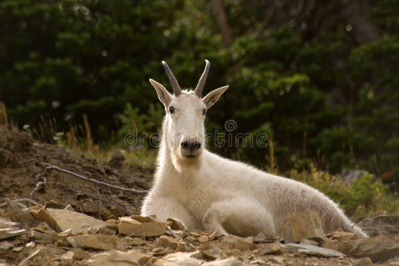 Montana wildlife stock photos
