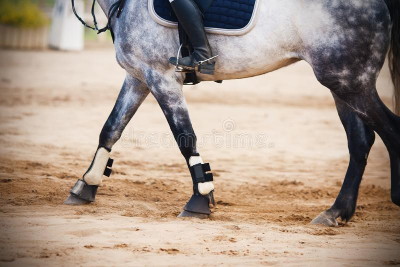 Montando um cavaleiro em um cavalo cinzento, que atravesse a arena arenosa fotografia de stock royalty free