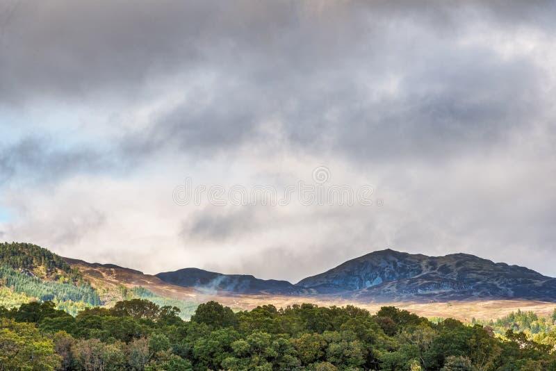 Montanhês escocês da ninhada acima de Crieff Escócia imagens de stock royalty free