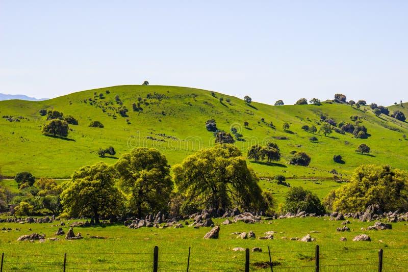 Montanhês verde luxúria na serra Nevada Foothills imagem de stock