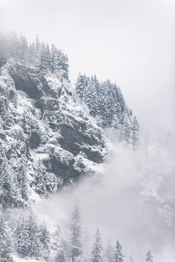Montanha íngreme nevado com árvores altas fotografia de stock royalty free