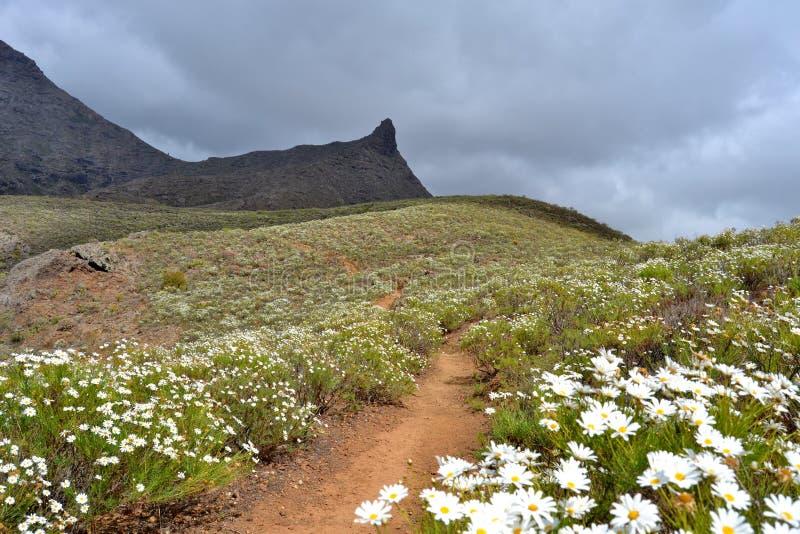 Montanha coberta com os marguerites imagens de stock