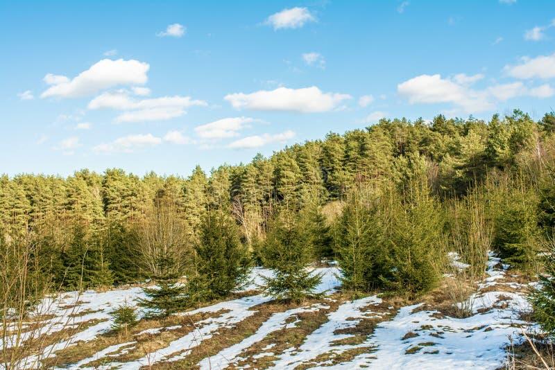 Montanha coberto de neve com pinhos crescentes e abetos pequenos, dia de mola ensolarado com o céu azul com nuvens fotos de stock royalty free