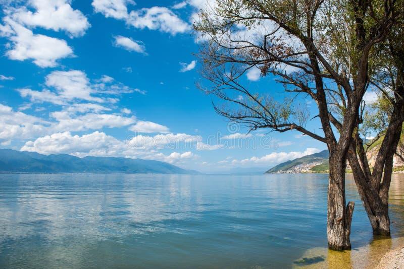 Montanha da árvore da nuvem do céu do lago imagem de stock
