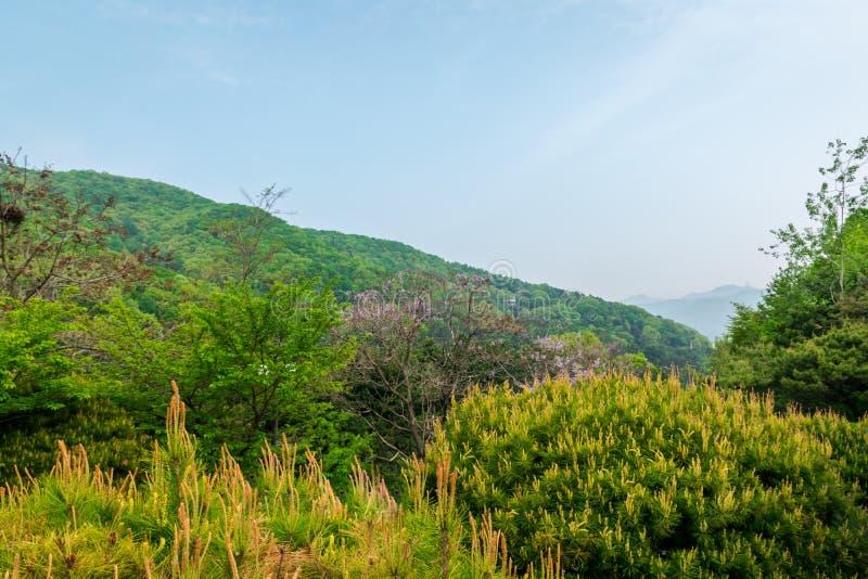 A montanha da opinião de muitas plantas em Coreia do Sul fotografia de stock royalty free