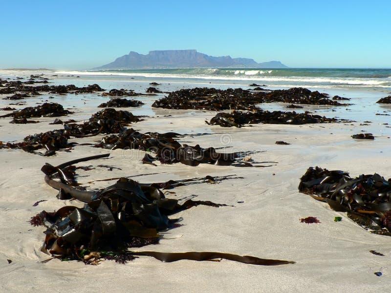 Montanha da tabela da praia Strewn Kelp fotografia de stock