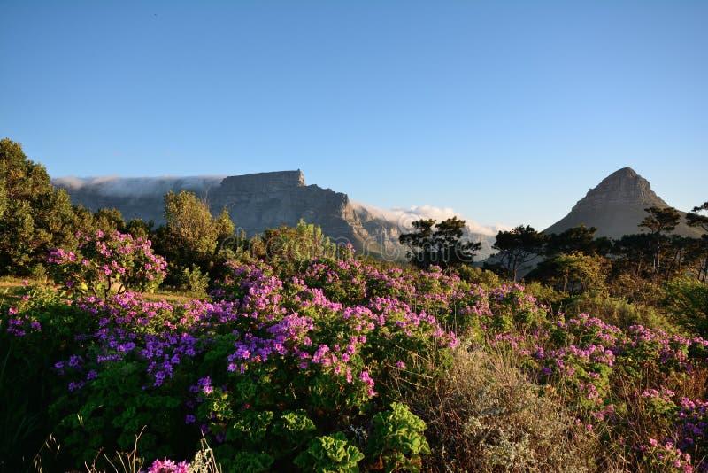 Montanha da tabela e cabeça dos leões, Cape Town fotografia de stock