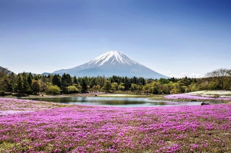 Montanha de Fuji fotografia de stock royalty free