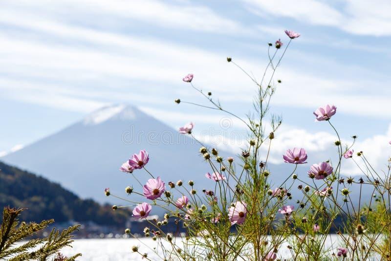 Montanha de Fuji no outono em Japão, floresta amarela imagens de stock royalty free