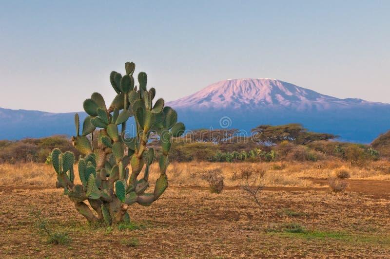 Montanha de Kilimanjaro no nascer do sol imagem de stock