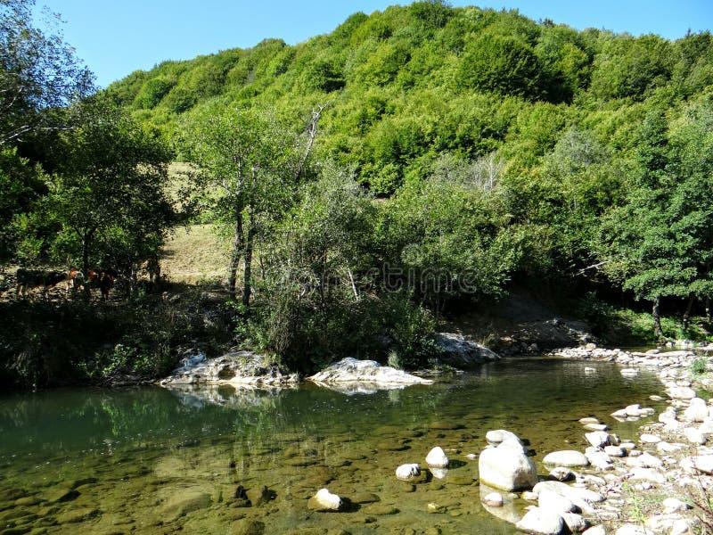 Montanha de Rodopa fotos de stock