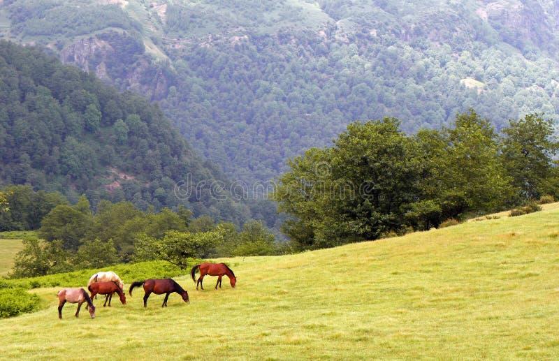 Montanha de Talysh em Alborz fotos de stock
