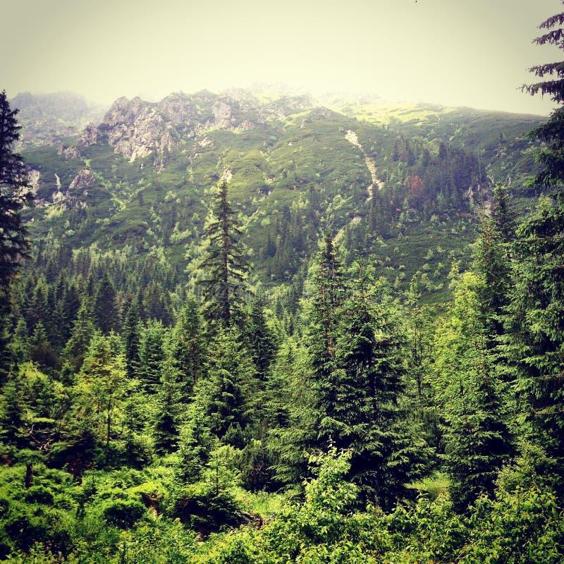 Montanha de Tatras imagem de stock