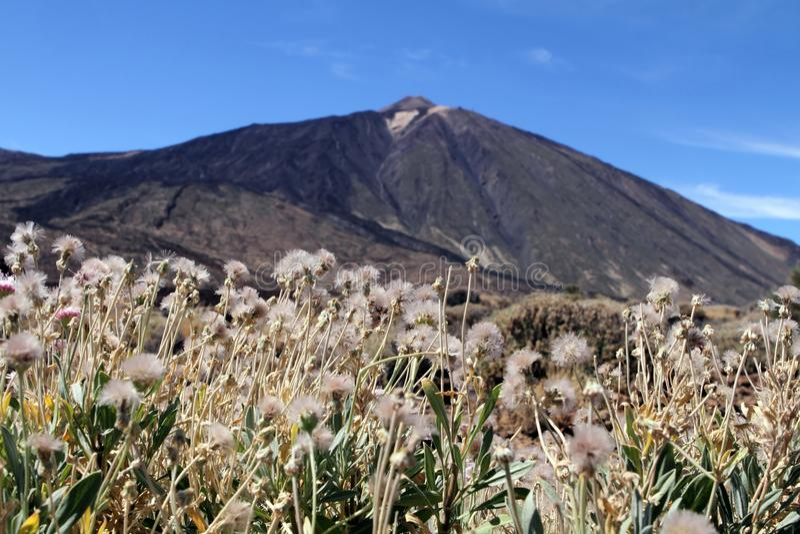 Montanha de Teide, Tenerife foto de stock
