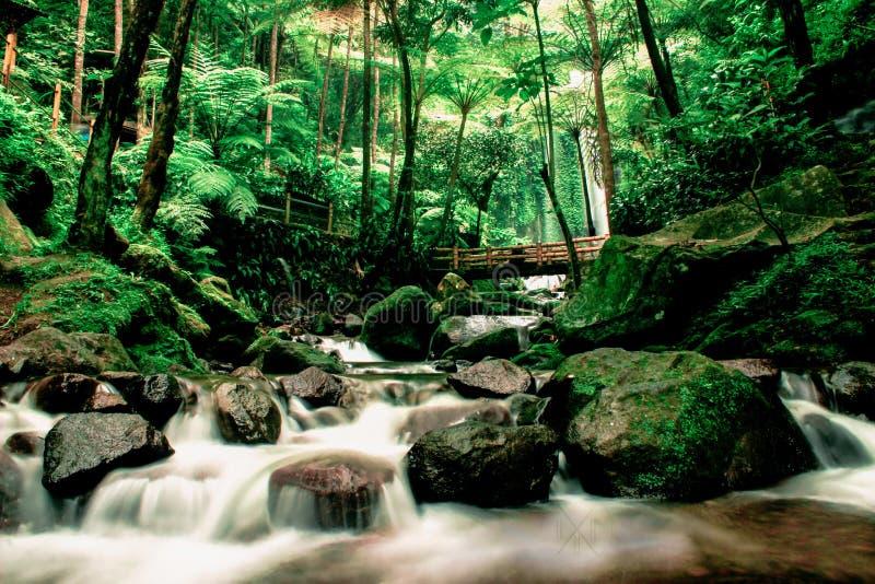 Montanha do lawu da queda da água foto de stock royalty free