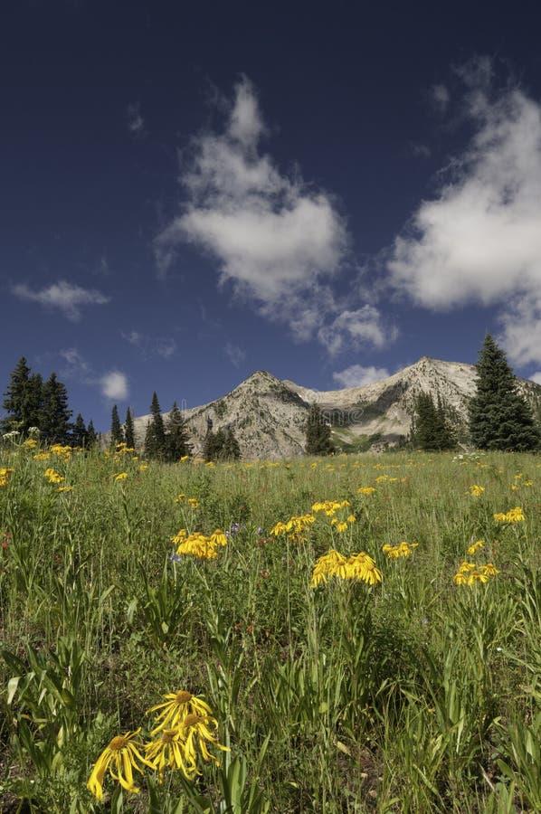Montanha do leste de Beckwith pela passagem de Kebler fotografia de stock royalty free