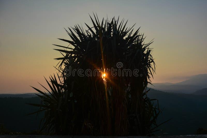 Montanha do por do sol da árvore foto de stock