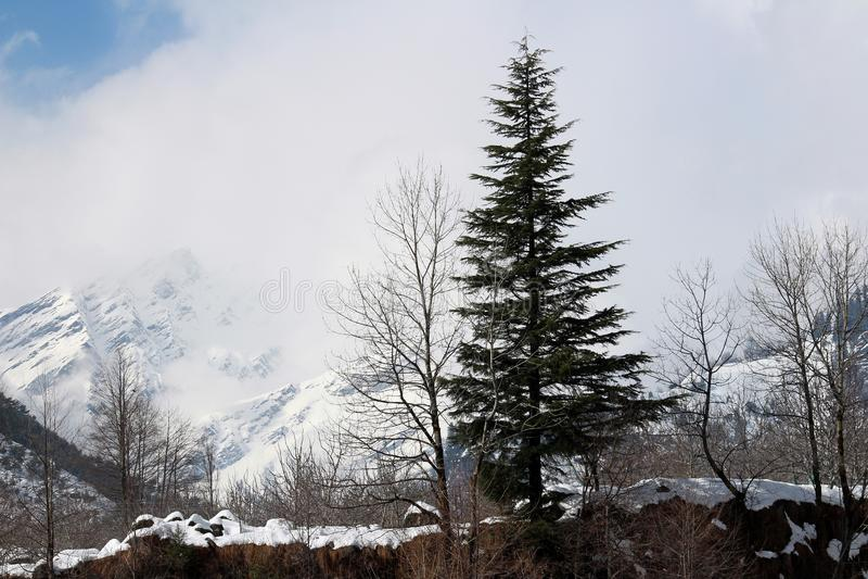 Montanha e árvore da cidade de Manali Himachal Pradesh na Índia imagem de stock royalty free