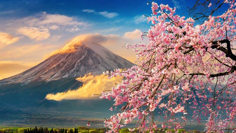 Montanha e flores de cerejeira de Fuji na mola, Jap?o fotografia de stock royalty free