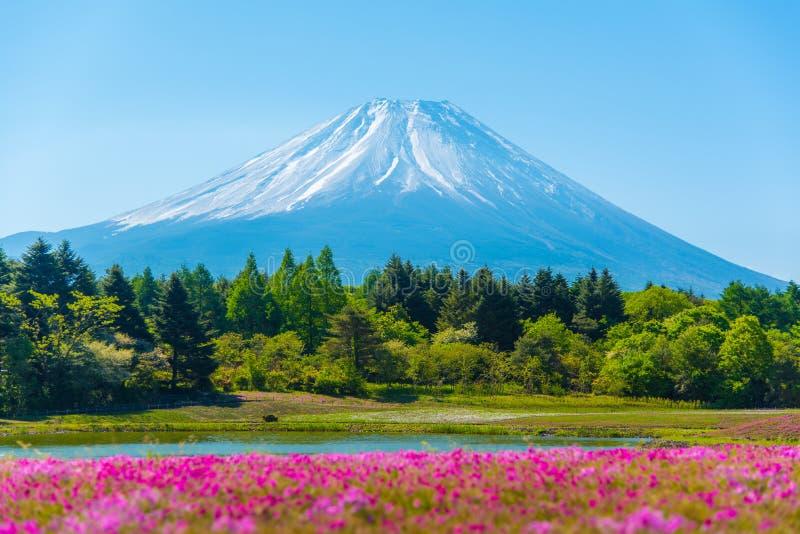 Montanha Fuji com primeiro plano obscuro do musgo cor-de-rosa sakura imagens de stock royalty free