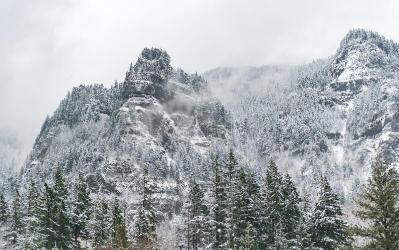 Montanha grande com madeira em Oregon fotos de stock royalty free