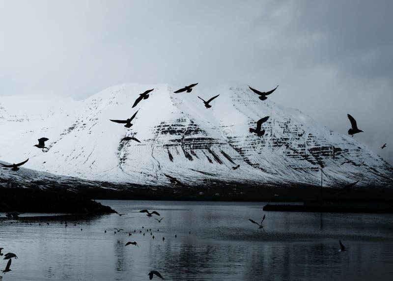 Montanha nevado bonita com os pássaros do lago e de voo fotos de stock