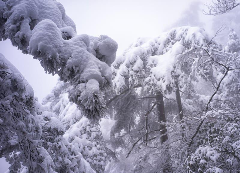 Montanha nevado huangshan fotos de stock royalty free